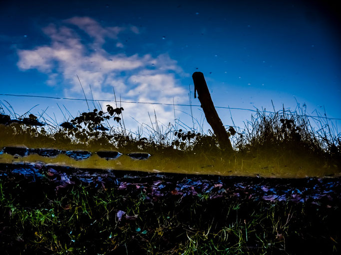Nuages en troupeau  Passant calmes et silencieux  Derrière les poteaux