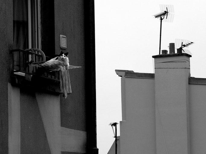 Chat perché - Rue Branda, Brest - 2010