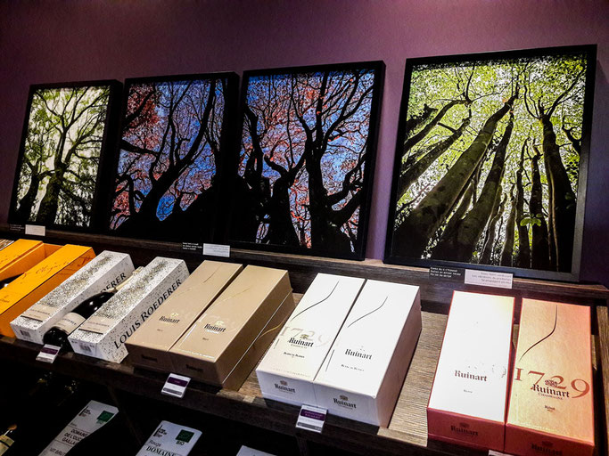 exposition photo brest 2019 arbres nature poésie haiku krank du brezhoneg