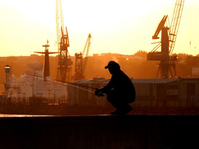 Un pêcheur observé par les grues du port - Port du Chateau à Brest - 2013