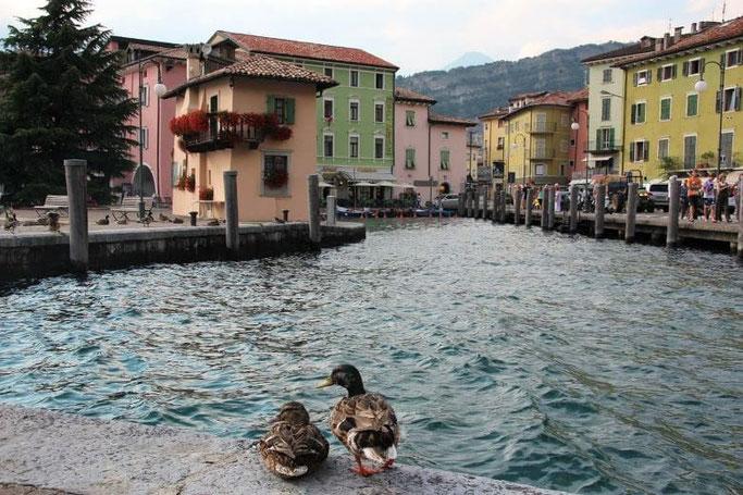 Gardasee Torbole Hotel Benaco