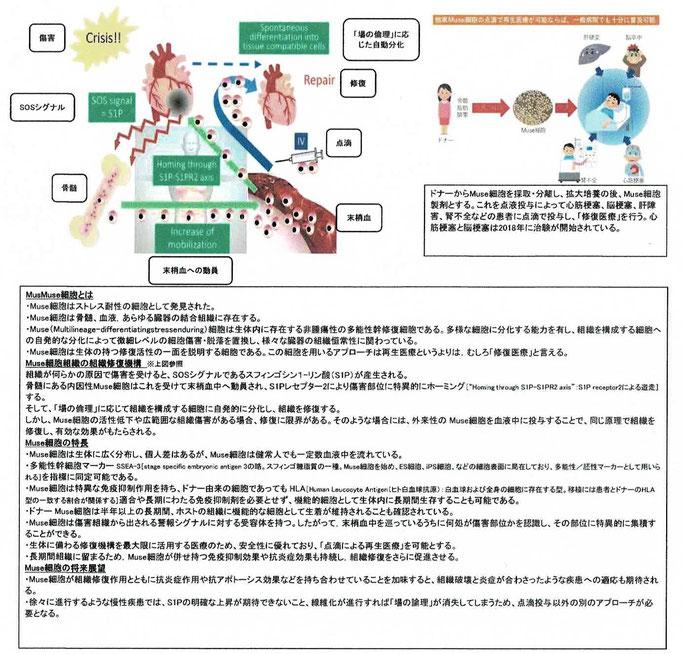Msue細胞研究の最前線