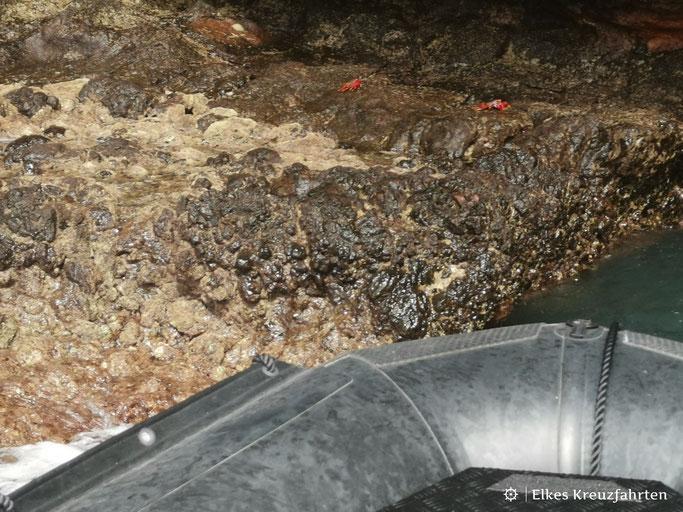 Krabben an der Küste La Gomeras