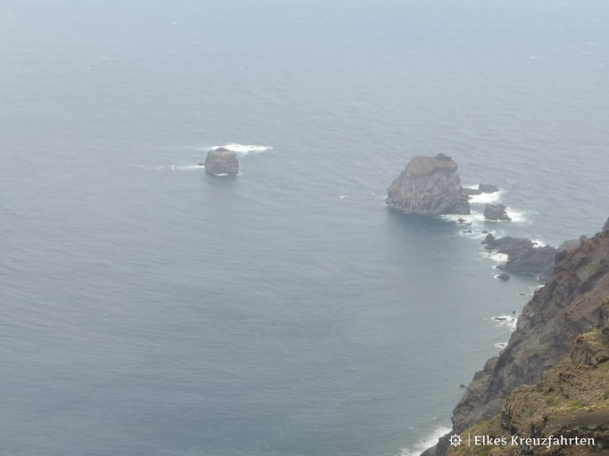 Auf dem kleinen Felsen werden die jungen Eidechsen geschützt vor Fressfeinden ausgesetzt, bis sie groß genug sind wieder ausgesiedelt zu werden.