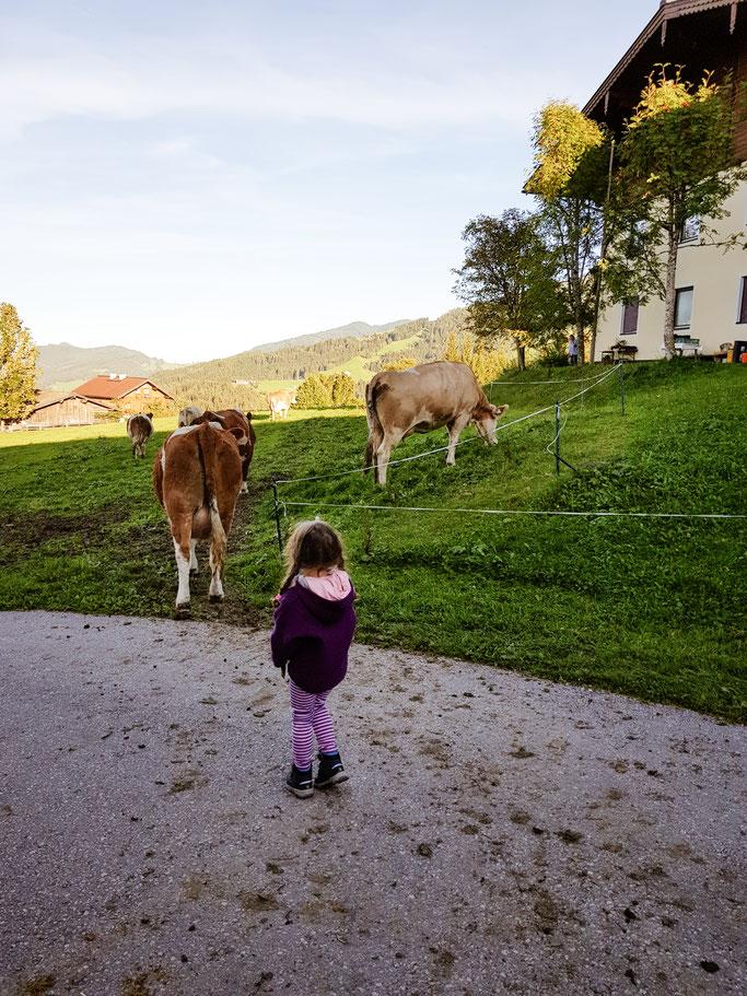Kühe beobachten und bei der Stallarbeit mithelfen