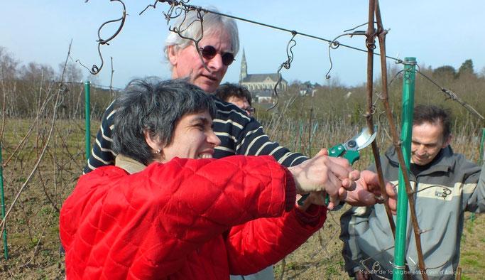 Des résidents taillent la vigne