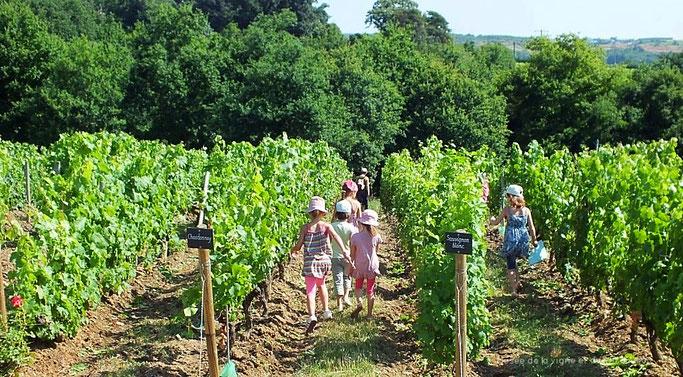 Enfant dans les vignes
