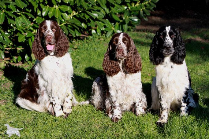 Finn mit seiner Mama Charmin in der Mitte und seiner Schwester Hermine rechts...
