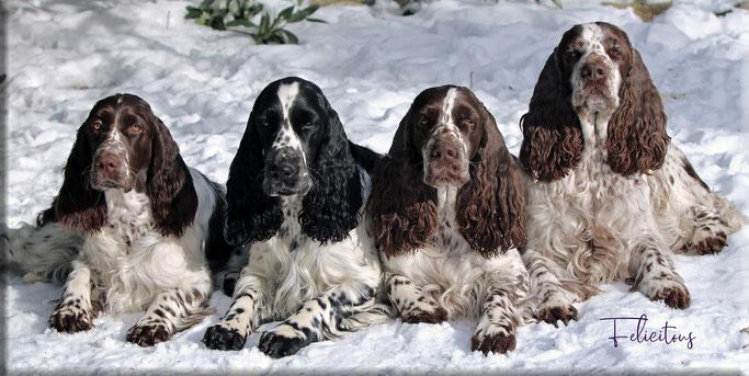 4 Generationen, drei davon gehen ursprünglich auf unsere MacLottas zurück. Ganz rechts Uroma Lotta, daneben Tochter Charmin, Enkelin Hermine und ganz links Urenkelin Qebell - jede sooo besonders für uns!
