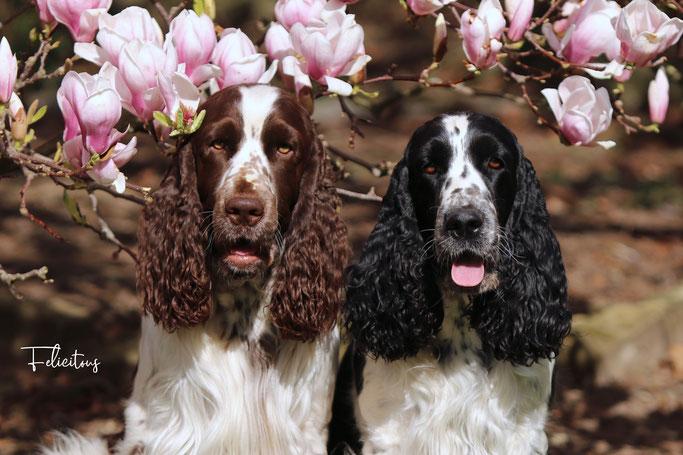 Die werdenden Eltern vor unserer herrlich duftenden Magnolie...