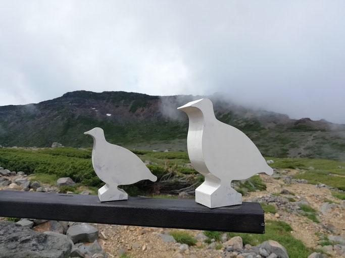二の池ヒュッテの雷鳥サイン 奥の山は摩利支天山