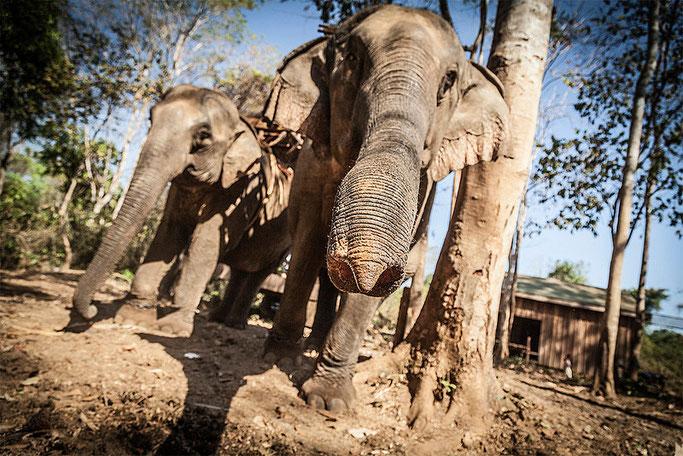 Elefantes cerca de la cascada de Katieng