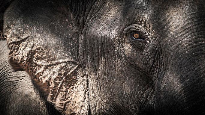 Elefantes en Ratanakiri