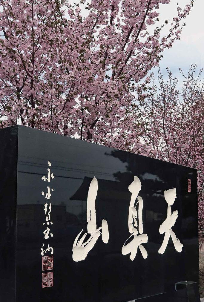 山桜・山門