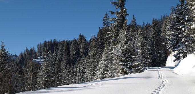 Eine Schneeschuhspur im Schnee durch den winterlichen Wald.