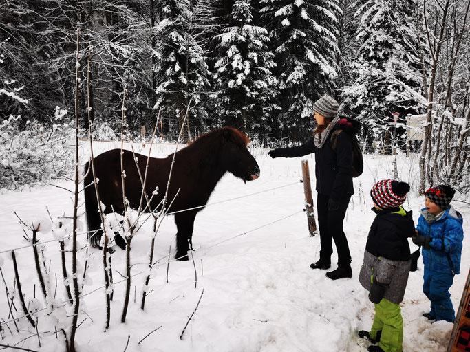 Pferd Adlgaß