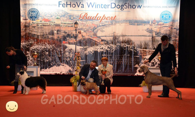 Frederic Chopin d'Ovilava gewinnt in Ungarn Best in Show! Freddie wins BIS in Hunary!
