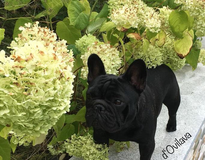 GERALDINE liebt Blumen!