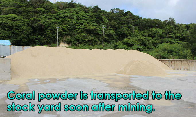 Coral powder is transported to the stock yard soon after mining.