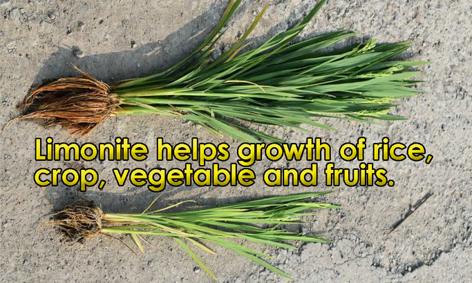 Limonite helps growth of rice, crop, vegetable and fruits.