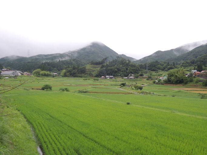 2018年7月初旬の稲と剣山。