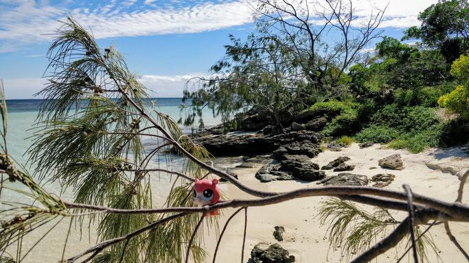 Equilibre précaire sur l'îlot Signal