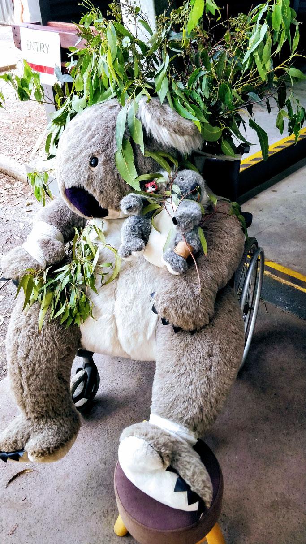 Jean-Mi en visite à l'hôpital des koalas