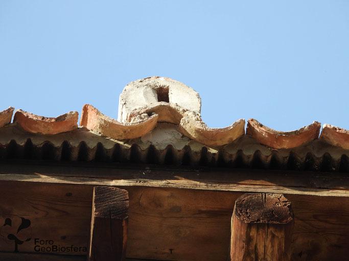 Orificio de entrada a nidal habilitado en el espacio bajo la teja. (Foto: F. Javier Sáez Frayssinet)