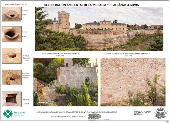 Plan de recuperación ambiental diseñado para la muralla sur del Alcázar. Es esencial la colaboración y disposición del promotor, la empresa adjudicataria de las obras y las organizaciones ambientales para alcanzar el éxito en las medias.