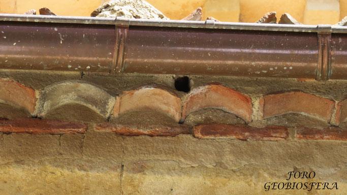 Con las dimensiones de entrada a los nidales se puede favorecer su ocupación por unas especies concretas. En este caso, el nidal está destinado a especies trogloditas de pequeño tamaño como el gorrión común o el chillón. (Foto: F. Javier Sáez Frayssinet)