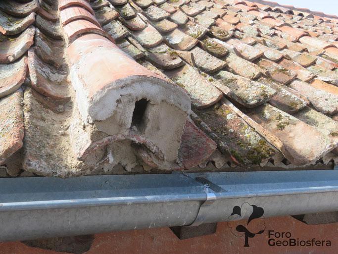 Detalle de la entrada al espacio de nidificación habilitado bajo teja. (Foto: F. Javier Sáez Frayssinet)