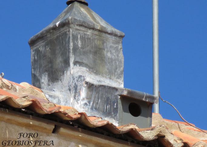 Entrada a espacio de reproducción de chova piquirroja a través de la mansarda (el diseño interior impide la ocupación por palomas) y pequeño orificio de entrada a otro nidal bajo teja. (Foto: F. Javier Sáez Frayssinet)