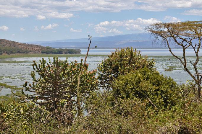 Très beau point de vue sur le lac Naivsha depuis la route