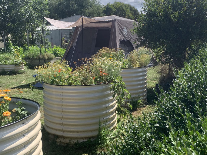 Camping in the vegetable garden.