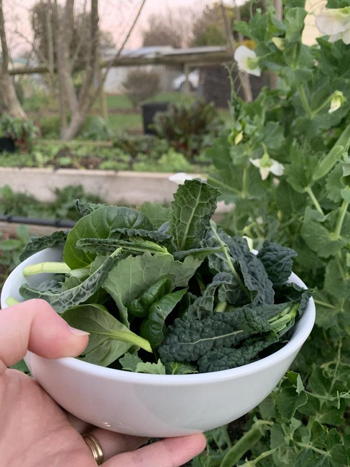 Growing green kales.