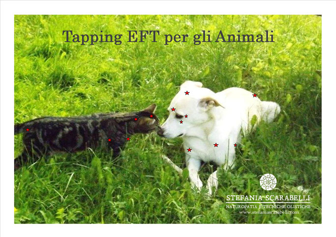 Tapping EFT Animali