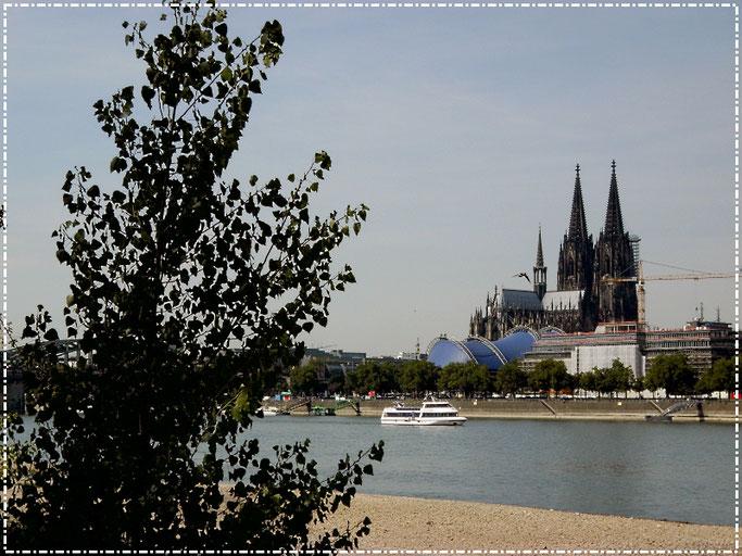 Der Kölner Dom vom Rheinpark aus gesehen