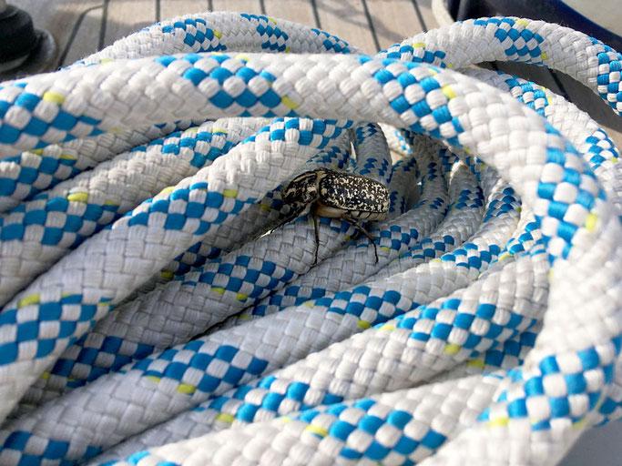 Blinder Passagier - erstaunlich wieviel Krach so ein kleines Insekt machen kann
