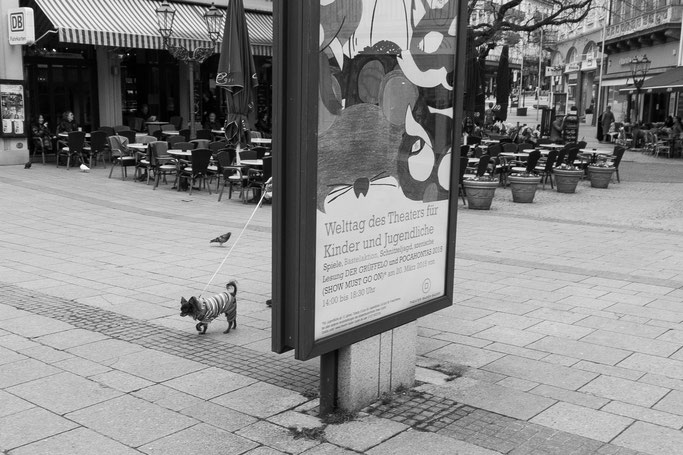 Der beste Freund des Menschen, Best friend of human, dogs, black and white, monocrome,street, streetphotography, doglife, dogs in our society, Hunde in unserem Leben, dogs in our life, Hunde sind auch nur Menschen, dogs are humans too,