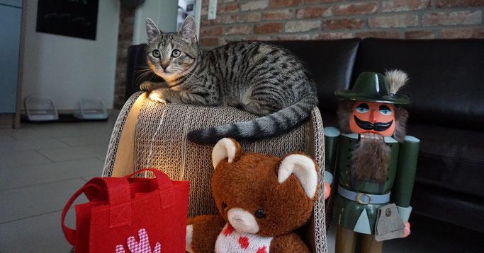 Katze Fibi sitzt auf dem Katzenschlitten von Seefalke-Design