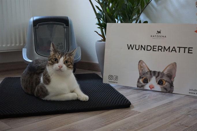 Die Katze von Katzeena sieht aus wie Katzenmädchen Kasi