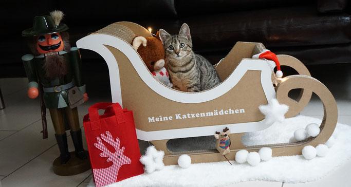 Katze Fibi sitzt verträumt im Schlitten von Seefalke-Design