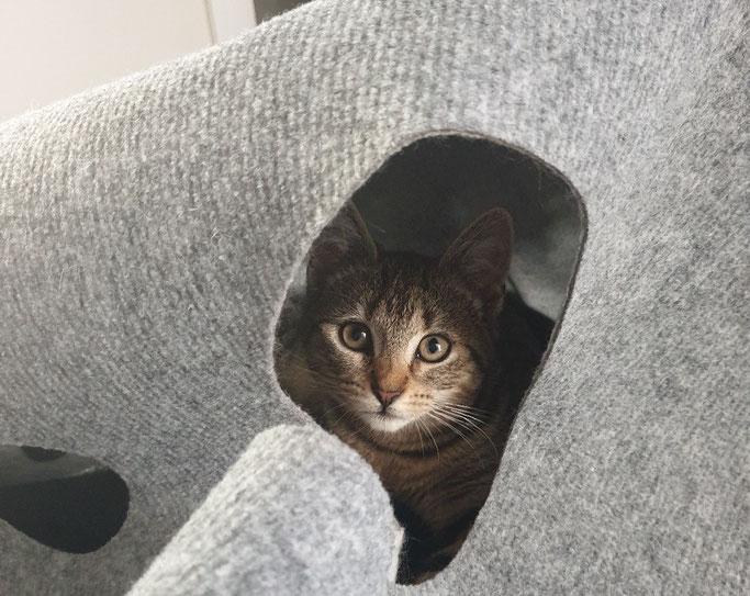 Katze Fibi in einer Höhle des CatMountain Spielteppichs