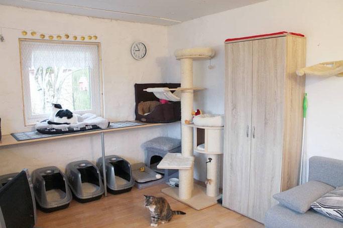 Das große Katzenzimmer in der Villa Kleiner Onkel