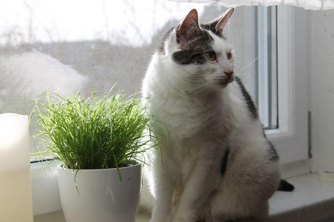 Katzen haben ein schönes Zuhause gefunden