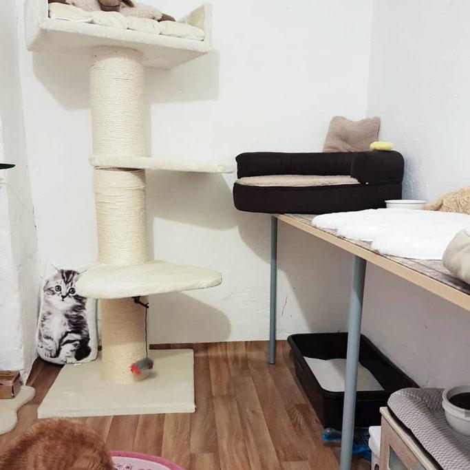 Ein Katzezimmer der Villa Kleiner Onkel