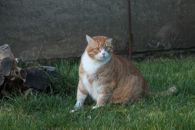 Kater Garfield aus der Villa Kleiner Onkel