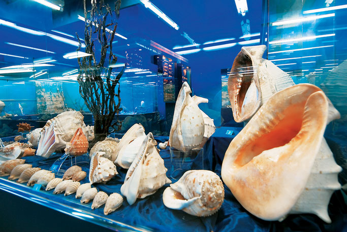 Meeresmuseum Navtilos Euböa