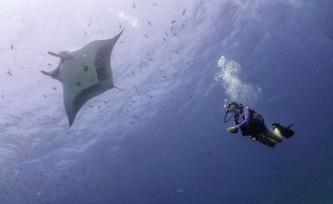 scuba diving with giant manta rays
