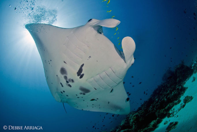 manta research